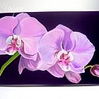 Radient Orchid